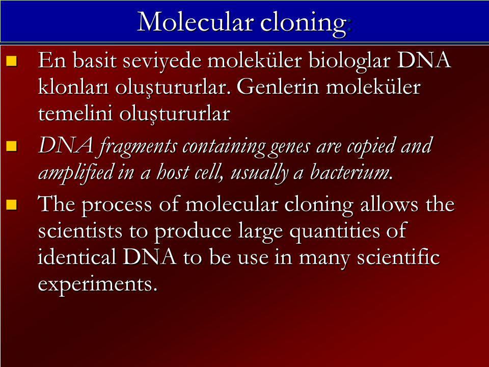 Molecular cloning: En basit seviyede moleküler biologlar DNA klonları oluştururlar.