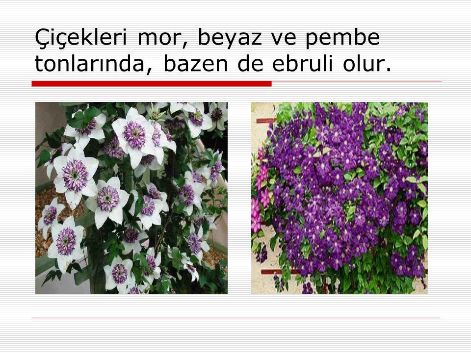  Çiçeklenme zamanı mayıstan ekim sonuna kadar değişir.