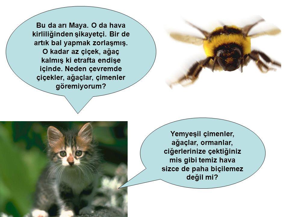 Bu da arı Maya. O da hava kirliliğinden şikayetçi.