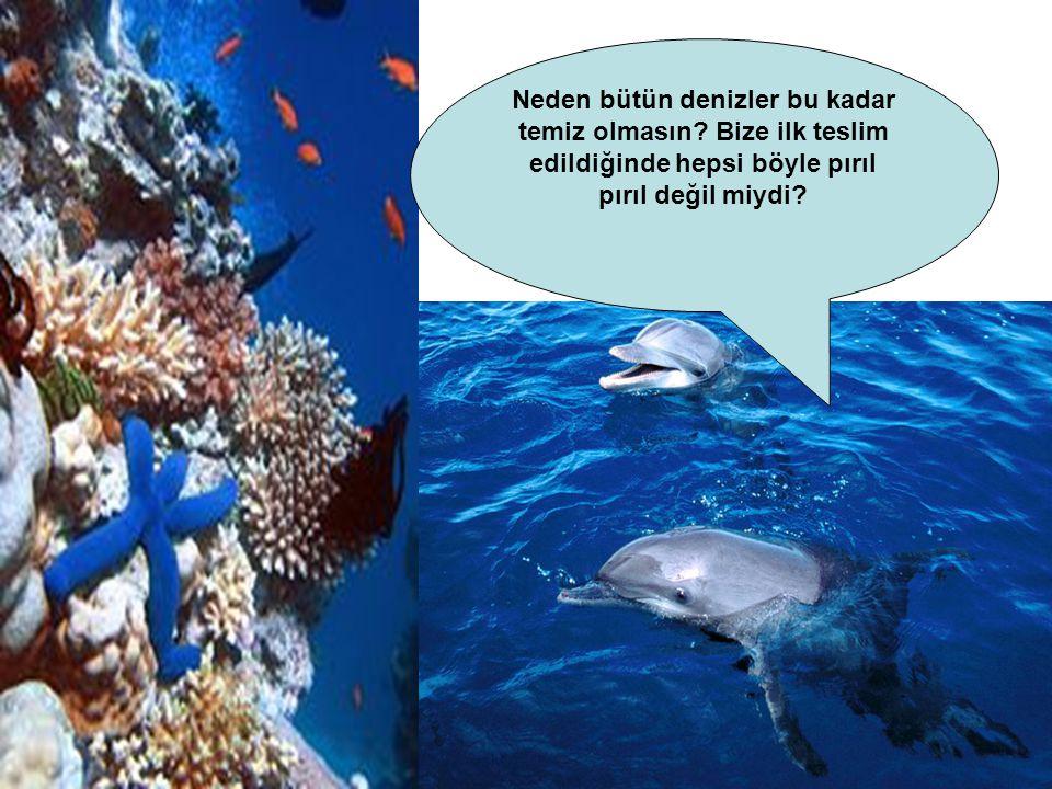 Neden bütün denizler bu kadar temiz olmasın.