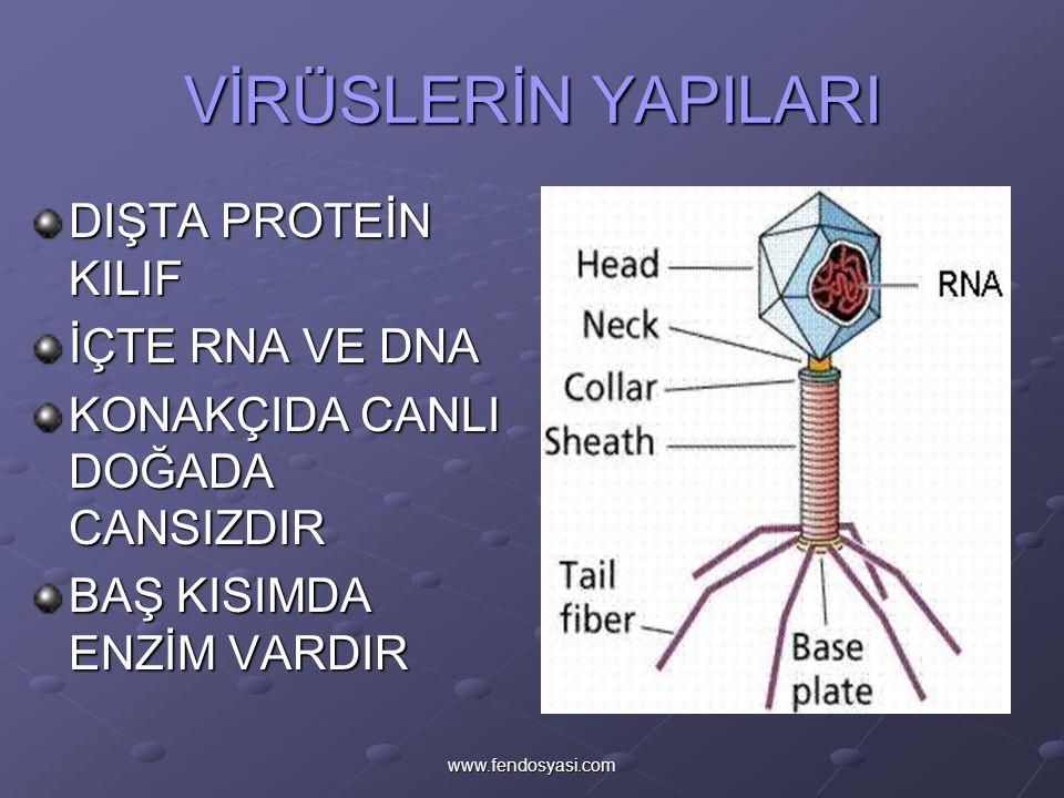 www.fendosyasi.com VİRÜSLERİN ŞEKİLLERİ ELİPSÇUBUKKÜRE