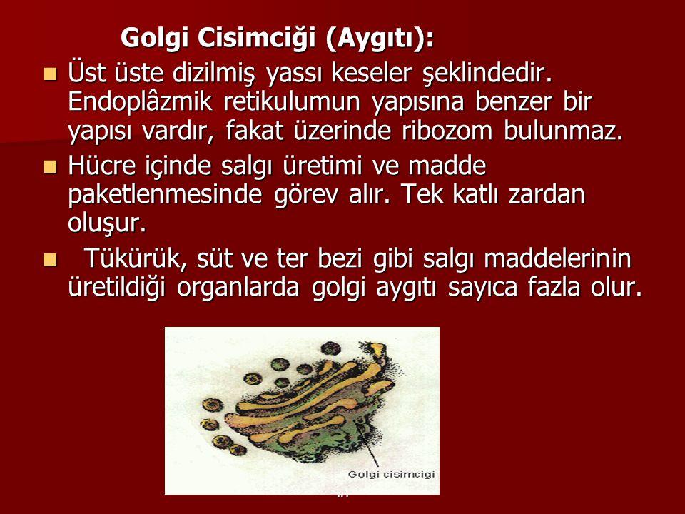 Y.Y Golgi Cisimciği (Aygıtı): Golgi Cisimciği (Aygıtı): Üst üste dizilmiş yassı keseler şeklindedir. Endoplâzmik retikulumun yapısına benzer bir yapıs