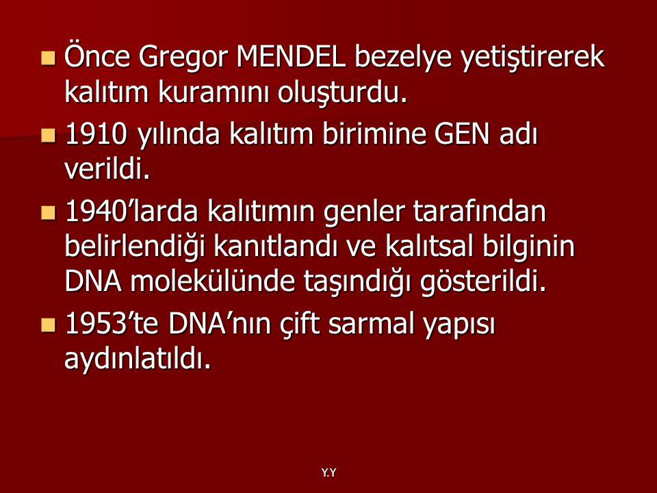 Önce Gregor MENDEL bezelye yetiştirerek kalıtım kuramını oluşturdu. Önce Gregor MENDEL bezelye yetiştirerek kalıtım kuramını oluşturdu. 1910 yılında k