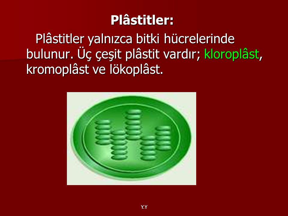 Y.Y Plâstitler: Plâstitler: Plâstitler yalnızca bitki hücrelerinde bulunur. Üç çeşit plâstit vardır; kloroplâst, kromoplâst ve lökoplâst. Plâstitler y