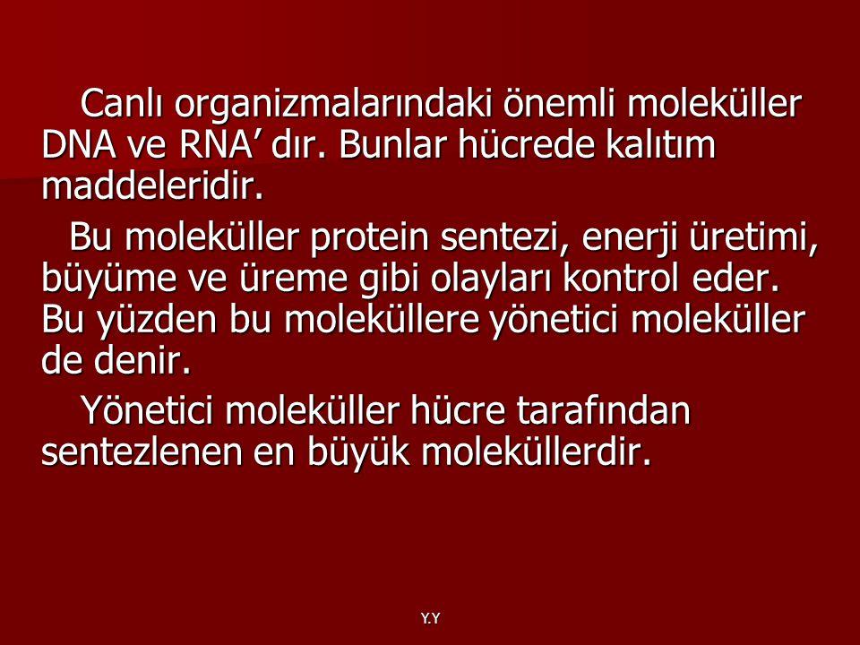 Y.Y Canlı organizmalarındaki önemli moleküller DNA ve RNA' dır. Bunlar hücrede kalıtım maddeleridir. Canlı organizmalarındaki önemli moleküller DNA ve