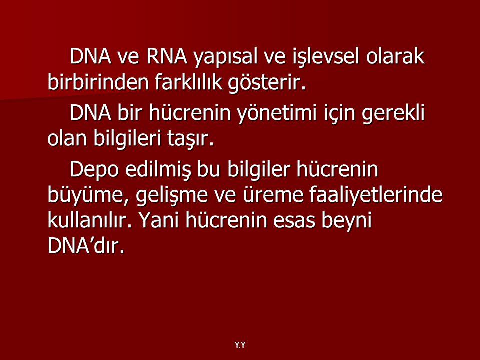 Y.Y DNA ve RNA yapısal ve işlevsel olarak birbirinden farklılık gösterir. DNA ve RNA yapısal ve işlevsel olarak birbirinden farklılık gösterir. DNA bi