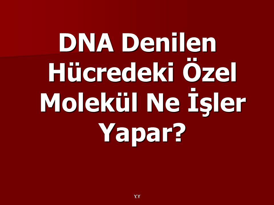 Y.Y DNA Denilen Hücredeki Özel Molekül Ne İşler Yapar?