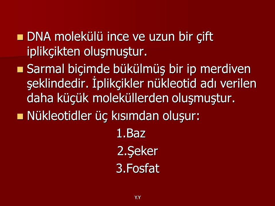 Y.Y DNA molekülü ince ve uzun bir çift iplikçikten oluşmuştur. DNA molekülü ince ve uzun bir çift iplikçikten oluşmuştur. Sarmal biçimde bükülmüş bir