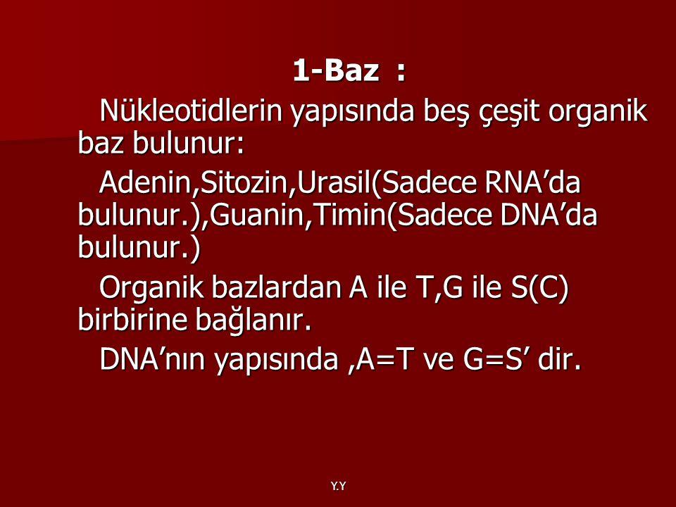 Y.Y 1-Baz : Nükleotidlerin yapısında beş çeşit organik baz bulunur: Nükleotidlerin yapısında beş çeşit organik baz bulunur: Adenin,Sitozin,Urasil(Sade