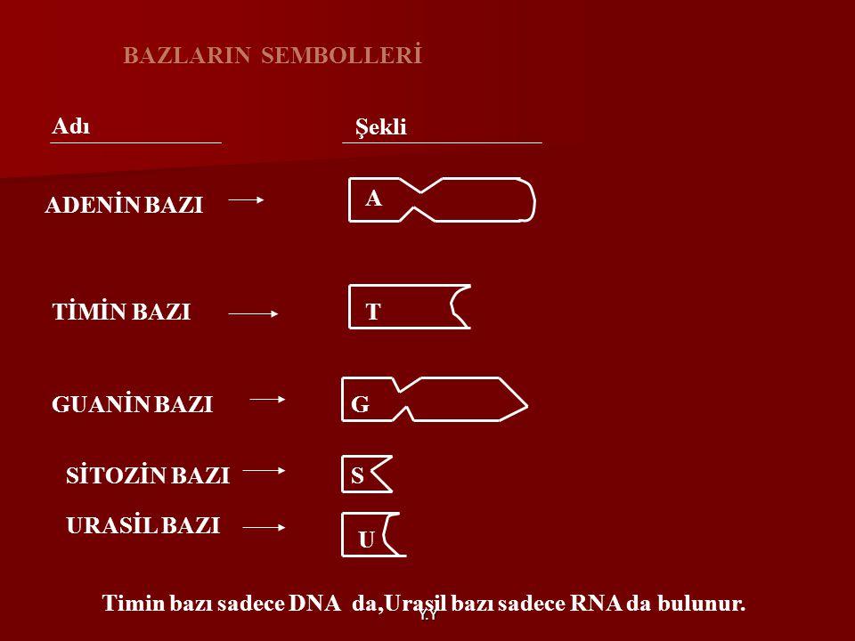 Y.Y BAZLARIN SEMBOLLERİ Adı Şekli ADENİN BAZI A TİMİN BAZIT GUANİN BAZI SİTOZİN BAZIS URASİL BAZI U G Timin bazı sadece DNA da,Urasil bazı sadece RNA