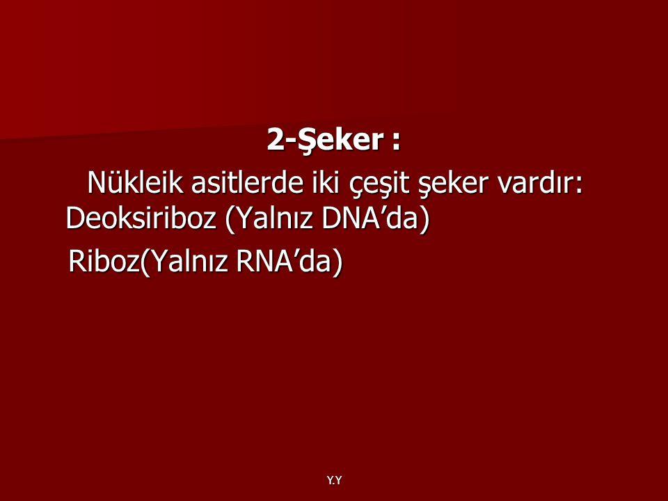 Y.Y 2-Şeker : Nükleik asitlerde iki çeşit şeker vardır: Deoksiriboz (Yalnız DNA'da) Nükleik asitlerde iki çeşit şeker vardır: Deoksiriboz (Yalnız DNA'