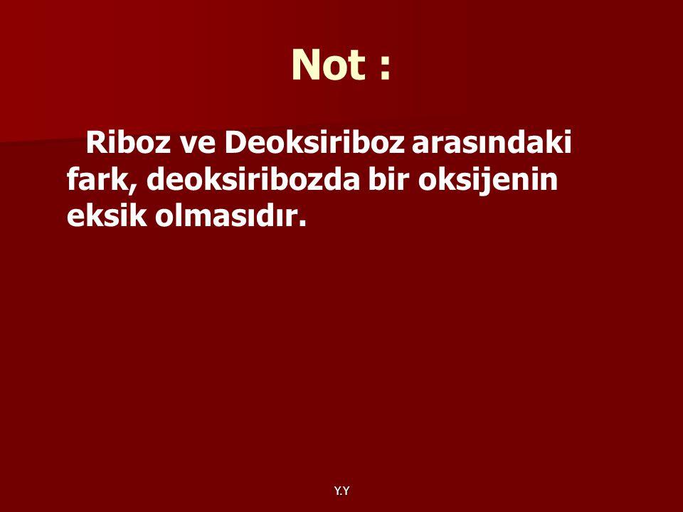 Y.Y Not : Riboz ve Deoksiriboz arasındaki fark, deoksiribozda bir oksijenin eksik olmasıdır.