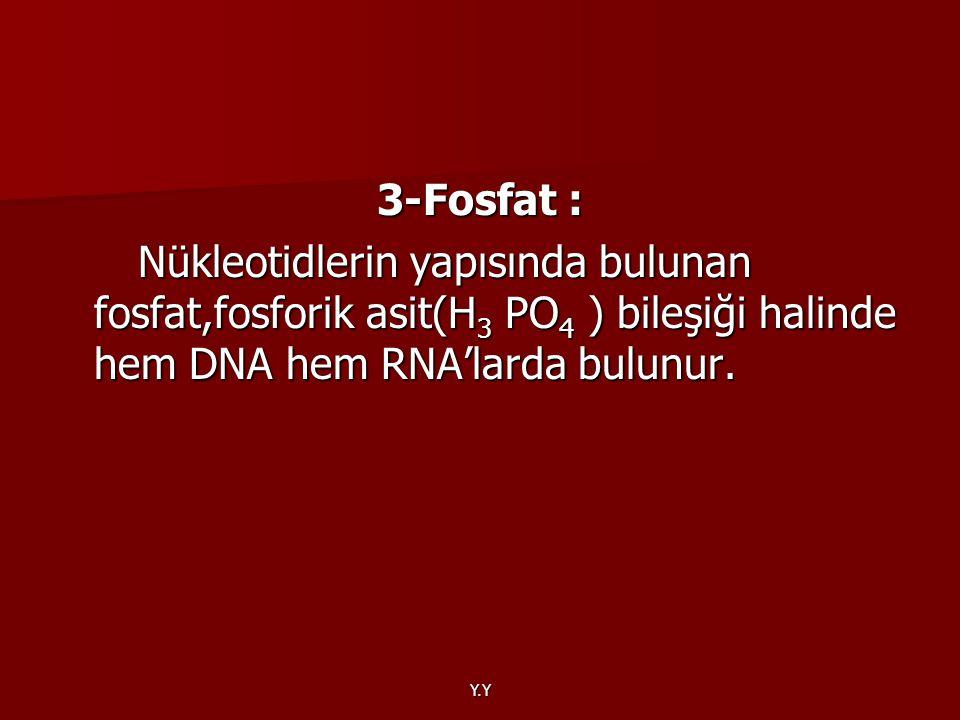 Y.Y 3-Fosfat : Nükleotidlerin yapısında bulunan fosfat,fosforik asit(H 3 PO 4 ) bileşiği halinde hem DNA hem RNA'larda bulunur. Nükleotidlerin yapısın