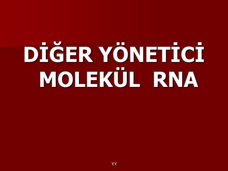 Y.Y DİĞER YÖNETİCİ MOLEKÜL RNA