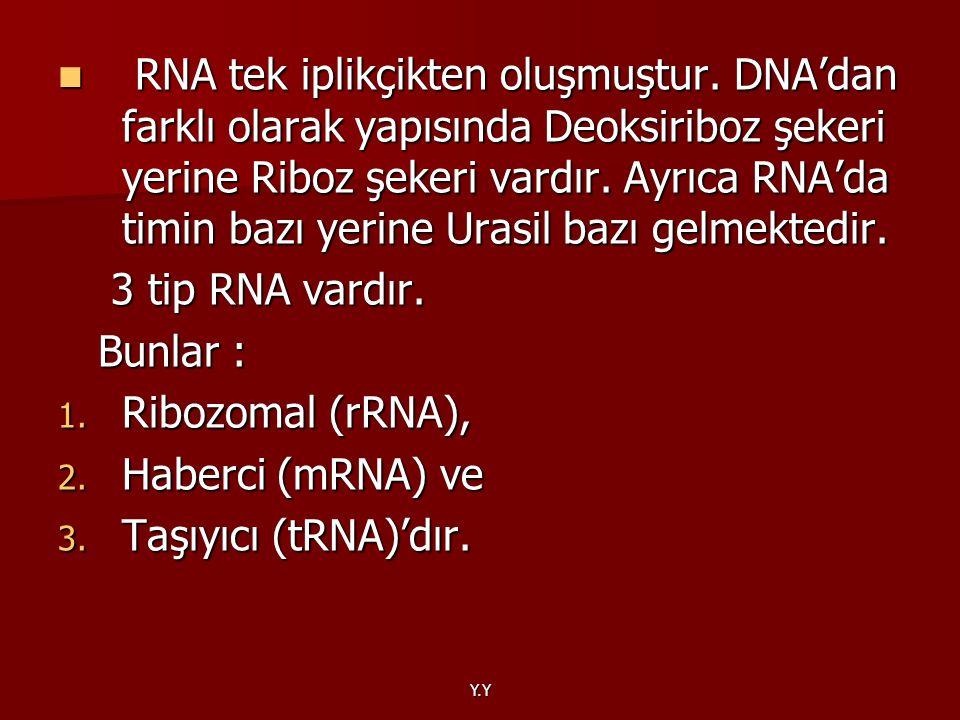 Y.Y RNA tek iplikçikten oluşmuştur. DNA'dan farklı olarak yapısında Deoksiriboz şekeri yerine Riboz şekeri vardır. Ayrıca RNA'da timin bazı yerine Ura