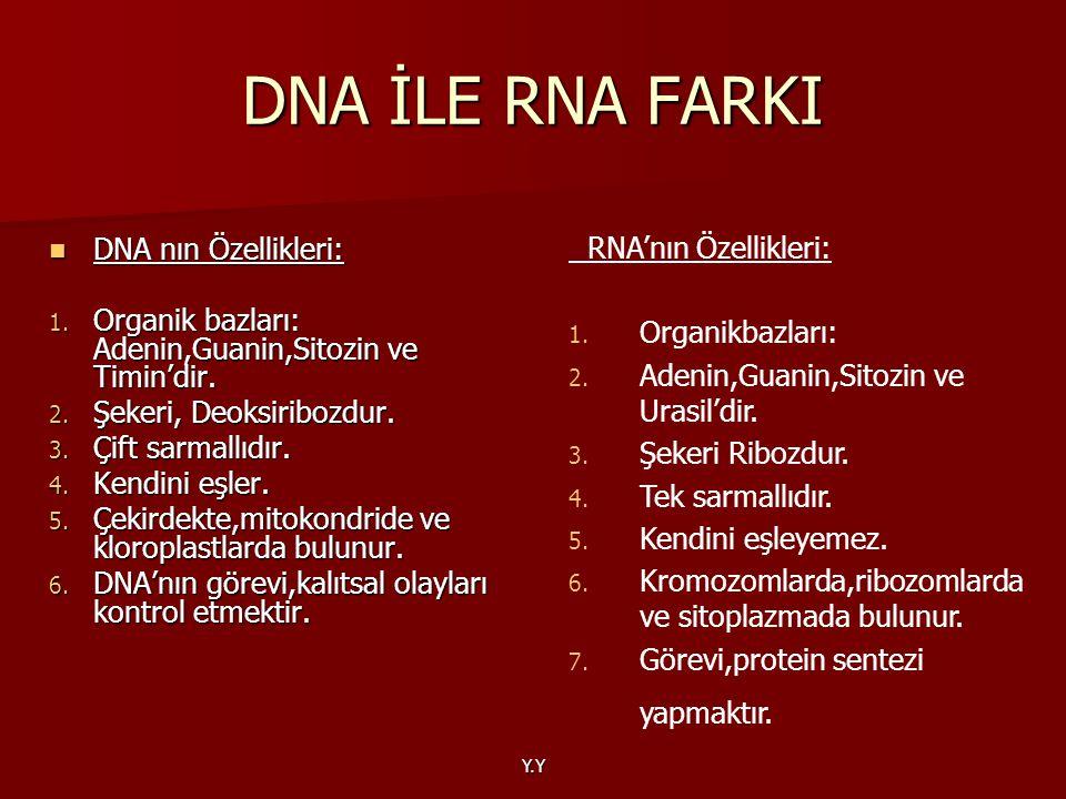 Y.Y DNA nın Özellikleri: DNA nın Özellikleri: 1. Organik bazları: Adenin,Guanin,Sitozin ve Timin'dir. 2. Şekeri, Deoksiribozdur. 3. Çift sarmallıdır.