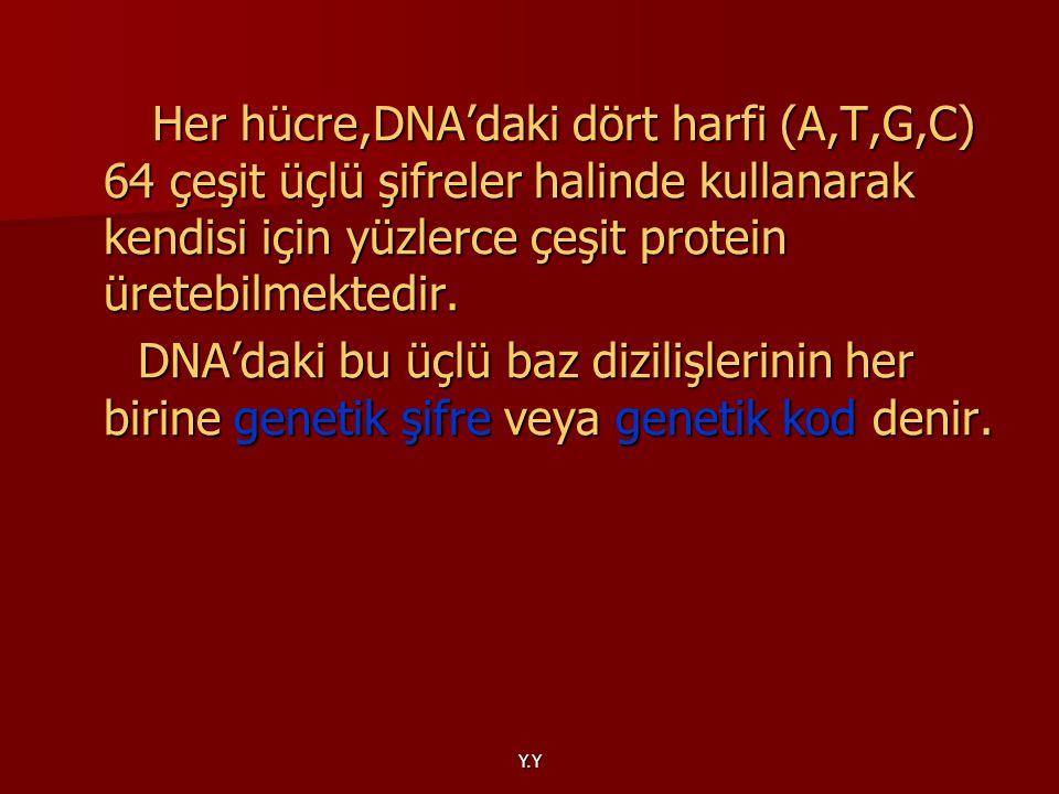 Y.Y Her hücre,DNA'daki dört harfi (A,T,G,C) 64 çeşit üçlü şifreler halinde kullanarak kendisi için yüzlerce çeşit protein üretebilmektedir. Her hücre,