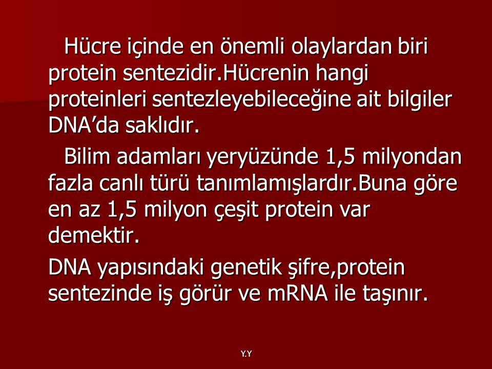 Y.Y Hücre içinde en önemli olaylardan biri protein sentezidir.Hücrenin hangi proteinleri sentezleyebileceğine ait bilgiler DNA'da saklıdır. Hücre için