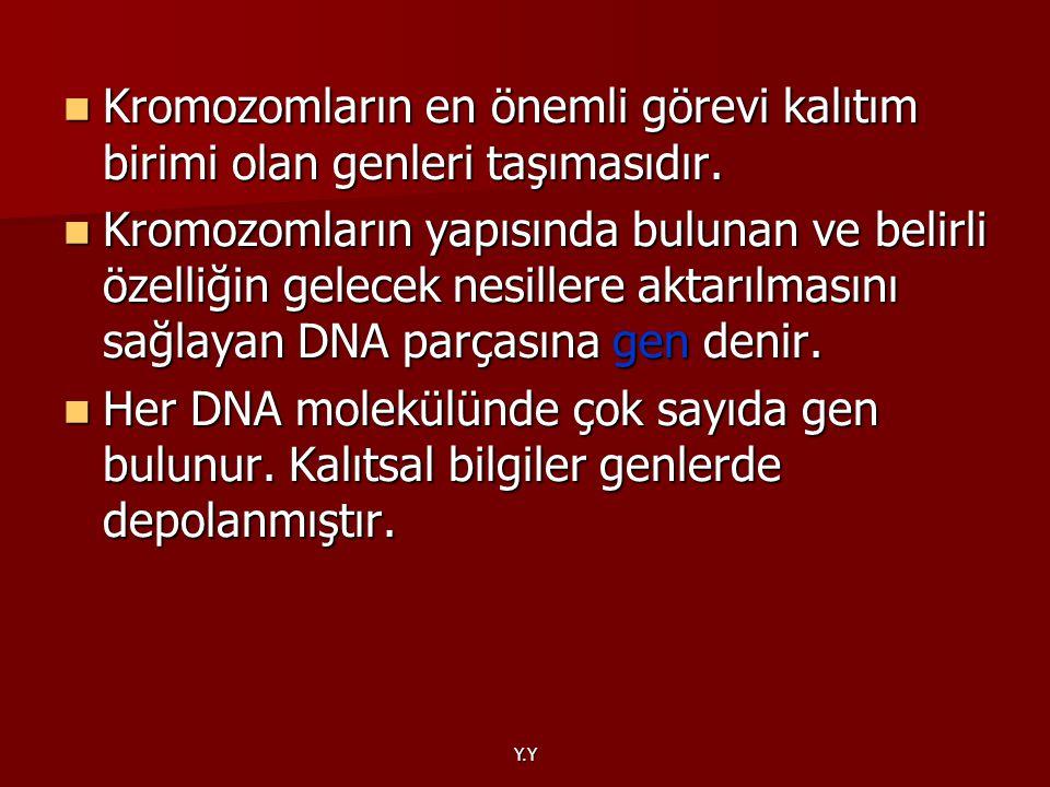 Y.Y Kromozomların en önemli görevi kalıtım birimi olan genleri taşımasıdır. Kromozomların en önemli görevi kalıtım birimi olan genleri taşımasıdır. Kr