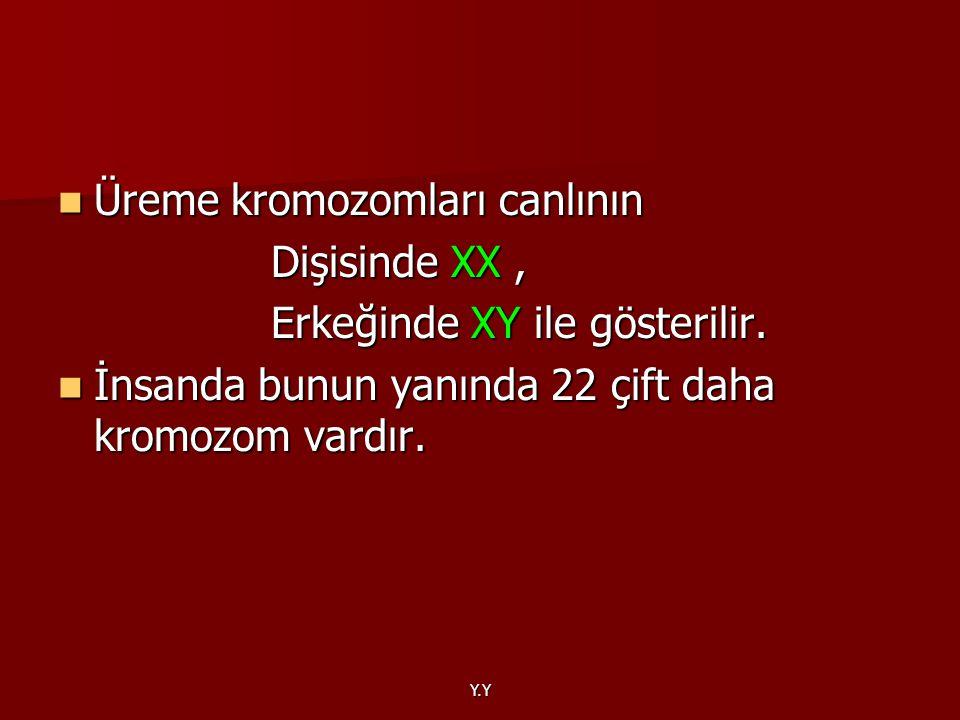 Y.Y Üreme kromozomları canlının Üreme kromozomları canlının Dişisinde XX, Dişisinde XX, Erkeğinde XY ile gösterilir. Erkeğinde XY ile gösterilir. İnsa