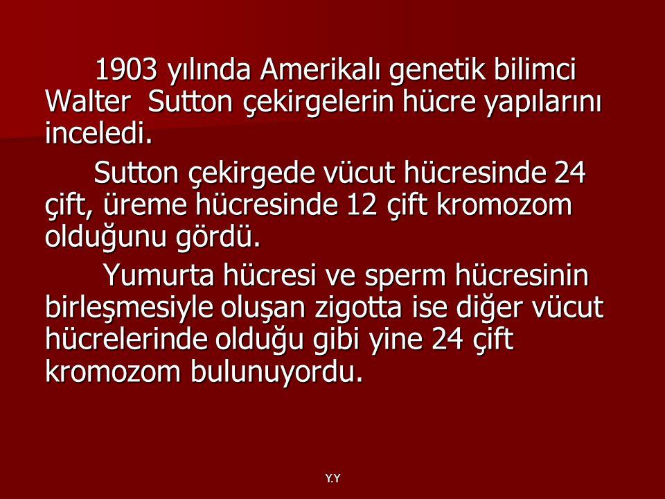 Y.Y 1903 yılında Amerikalı genetik bilimci Walter Sutton çekirgelerin hücre yapılarını inceledi. 1903 yılında Amerikalı genetik bilimci Walter Sutton