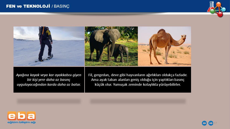 FEN ve TEKNOLOJİ / BASINÇ 17 Fil, gergedan, deve gibi hayvanların ağırlıkları oldukça fazladır. Ama ayak taban alanları geniş olduğu için yaptıkları b