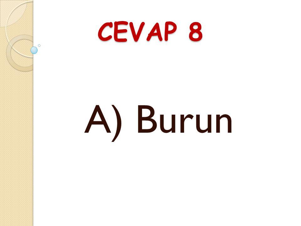 CEVAP 8 A) Burun