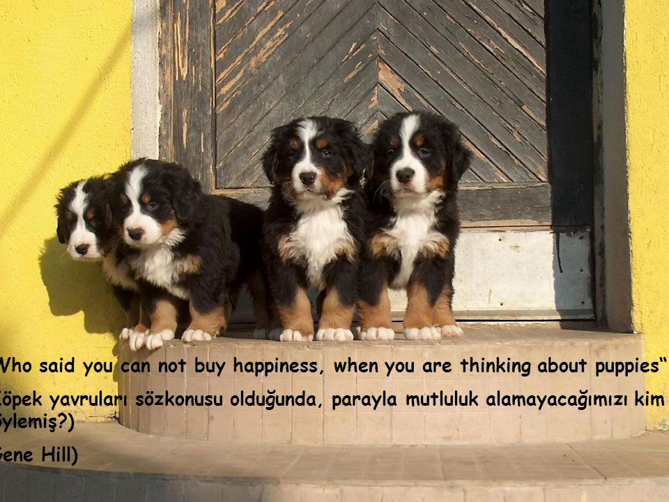 The dog knows, but does not know that he knows (Köpek bilir ama neyi bildiğini bilmez) (Pierre Teilhard de Chardin)