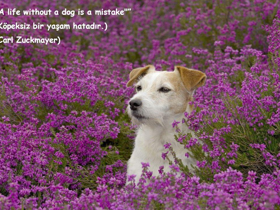 A life without a dog is a mistake (Köpeksiz bir yaşam hatadır.) (Carl Zuckmayer)