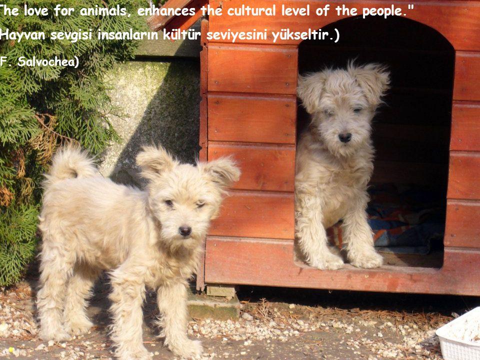 The love for animals, enhances the cultural level of the people. (Hayvan sevgisi insanların kültür seviyesini yükseltir.) (F.