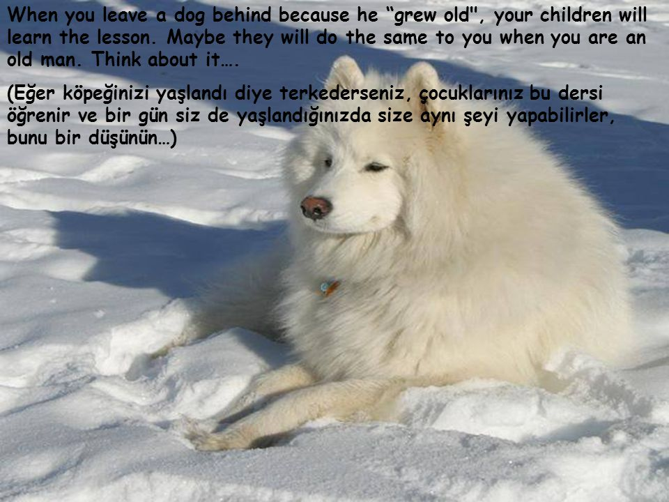 When you leave a dog behind because he grew old , your children will learn the lesson.