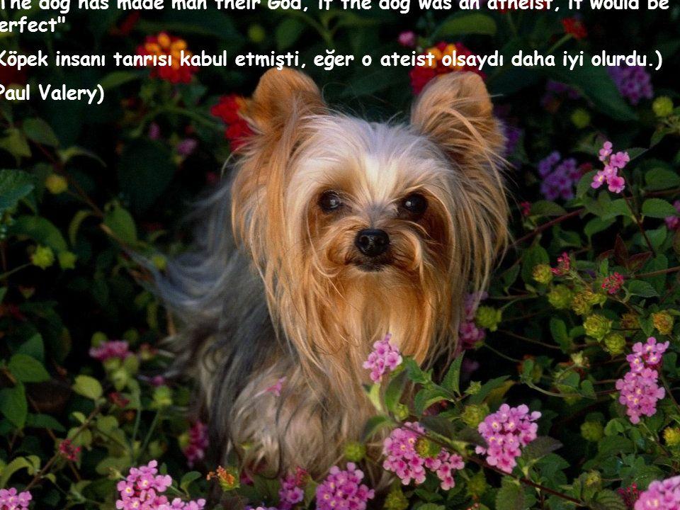 The dog has made man their God, if the dog was an atheist, it would be perfect (Köpek insanı tanrısı kabul etmişti, eğer o ateist olsaydı daha iyi olurdu.) (Paul Valery)