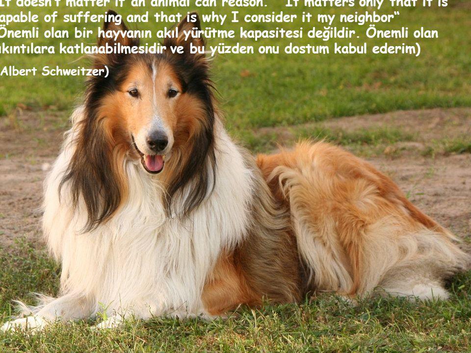 It doesn't matter if an animal can reason. It matters only that it is capable of suffering and that is why I consider it my neighbor (Önemli olan bir hayvanın akıl yürütme kapasitesi değildir.