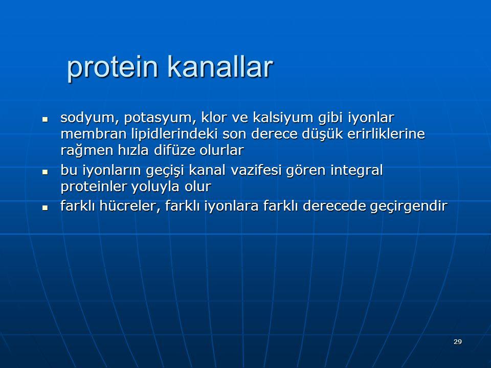 29 protein kanallar sodyum, potasyum, klor ve kalsiyum gibi iyonlar membran lipidlerindeki son derece düşük erirliklerine rağmen hızla difüze olurlar
