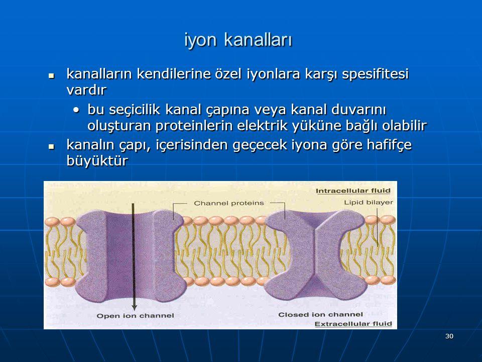 30 iyon kanalları kanalların kendilerine özel iyonlara karşı spesifitesi vardır kanalların kendilerine özel iyonlara karşı spesifitesi vardır bu seçic