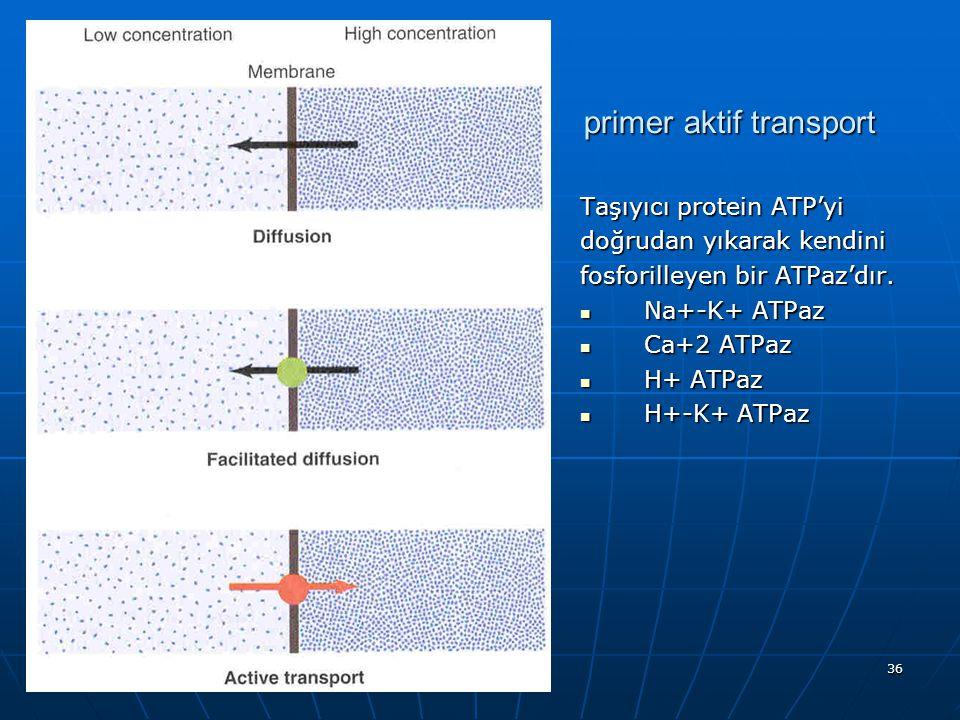 36 primer aktif transport Taşıyıcı protein ATP'yi doğrudan yıkarak kendini fosforilleyen bir ATPaz'dır. Na+-K+ ATPaz Na+-K+ ATPaz Ca+2 ATPaz Ca+2 ATPa