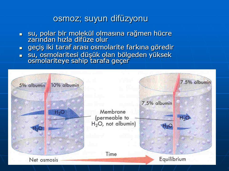 41 osmoz; suyun difüzyonu su, polar bir molekül olmasına rağmen hücre zarından hızla difüze olur su, polar bir molekül olmasına rağmen hücre zarından
