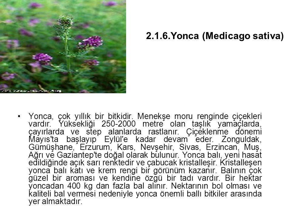 Yonca, çok yıllık bir bitkidir.Menekşe moru renginde çiçekleri vardır.