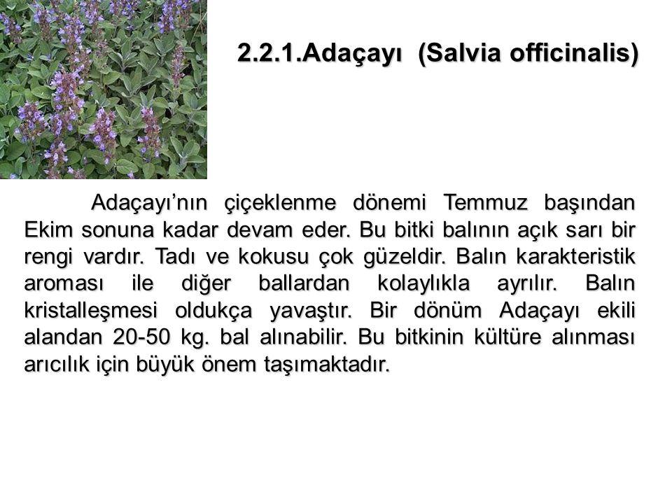 2.2.1.Adaçayı (Salvia officinalis) 2.2.1.Adaçayı (Salvia officinalis) Adaçayı'nın çiçeklenme dönemi Temmuz başından Ekim sonuna kadar devam eder.