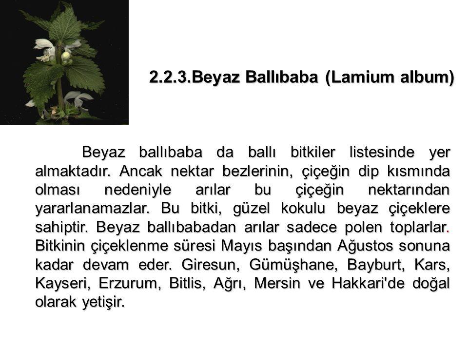 2.2.3.Beyaz Ballıbaba (Lamium album) Beyaz ballıbaba da ballı bitkiler listesinde yer almaktadır.