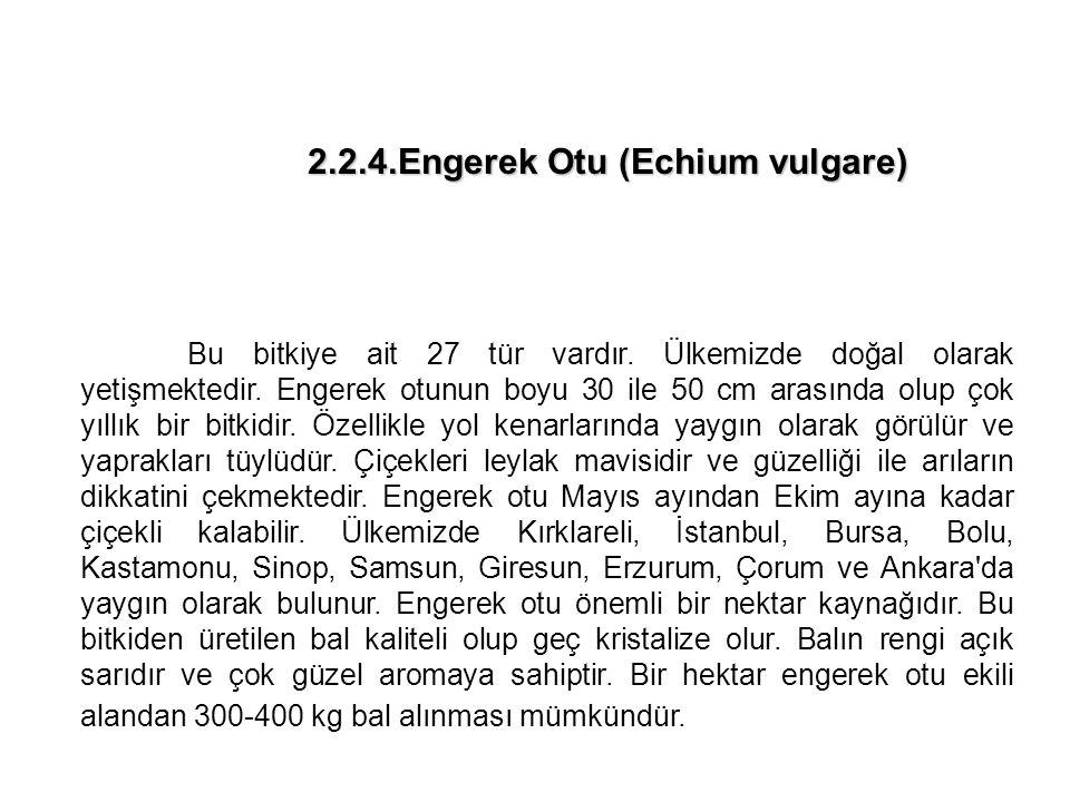 2.2.4.Engerek Otu (Echium vulgare) 2.2.4.Engerek Otu (Echium vulgare) Bu bitkiye ait 27 tür vardır.