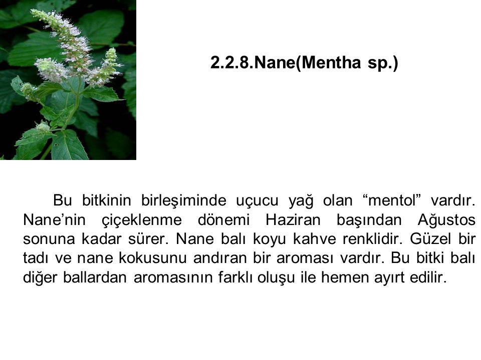 2.2.8.Nane(Mentha sp.) Bu bitkinin birleşiminde uçucu yağ olan mentol vardır.
