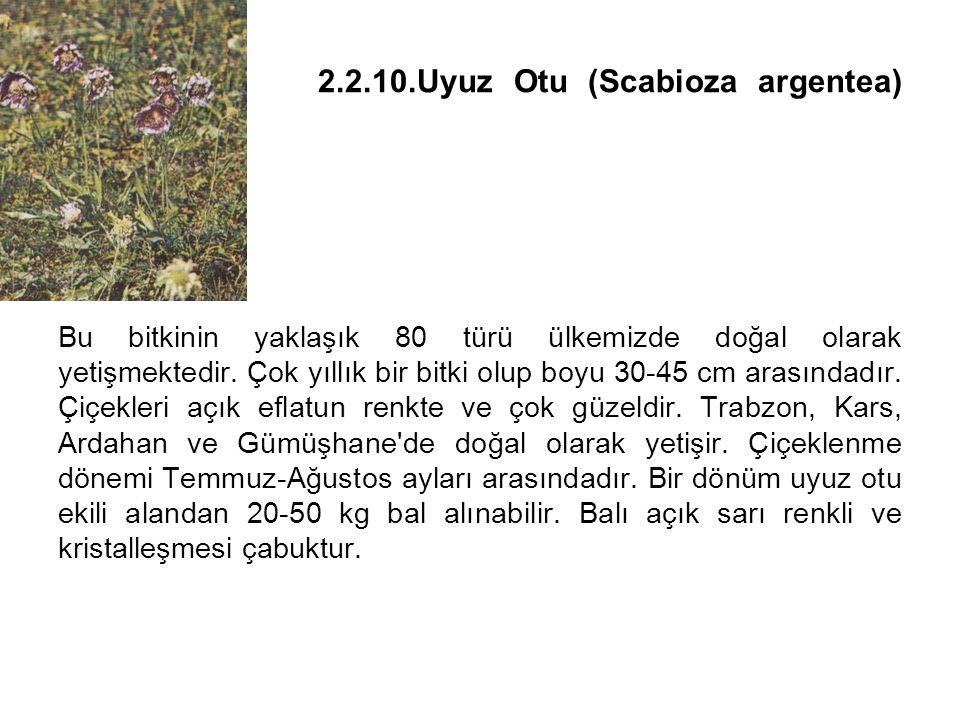 2.2.10.Uyuz Otu (Scabioza argentea) Bu bitkinin yaklaşık 80 türü ülkemizde doğal olarak yetişmektedir.