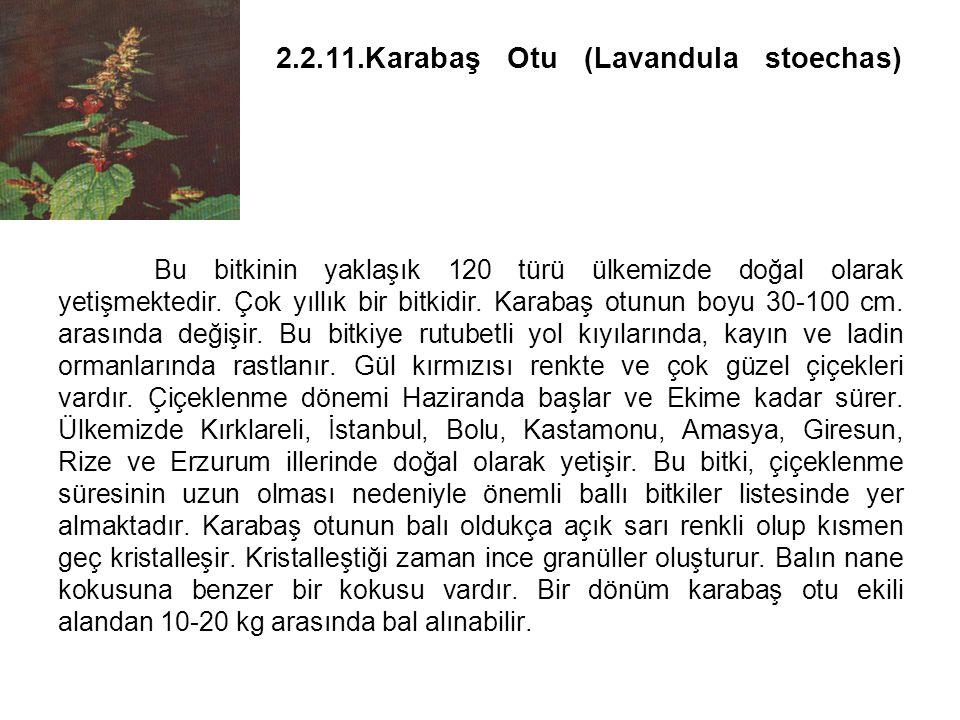 2.2.11.Karabaş Otu (Lavandula stoechas) Bu bitkinin yaklaşık 120 türü ülkemizde doğal olarak yetişmektedir.