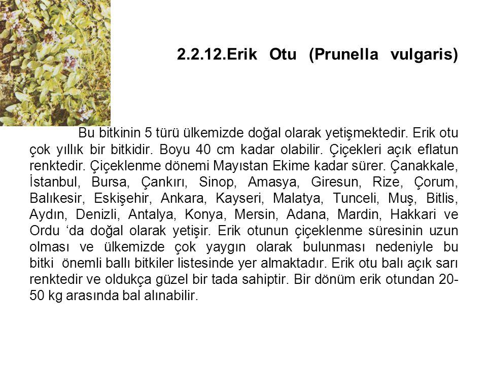 2.2.12.Erik Otu (Prunella vulgaris) Bu bitkinin 5 türü ülkemizde doğal olarak yetişmektedir.