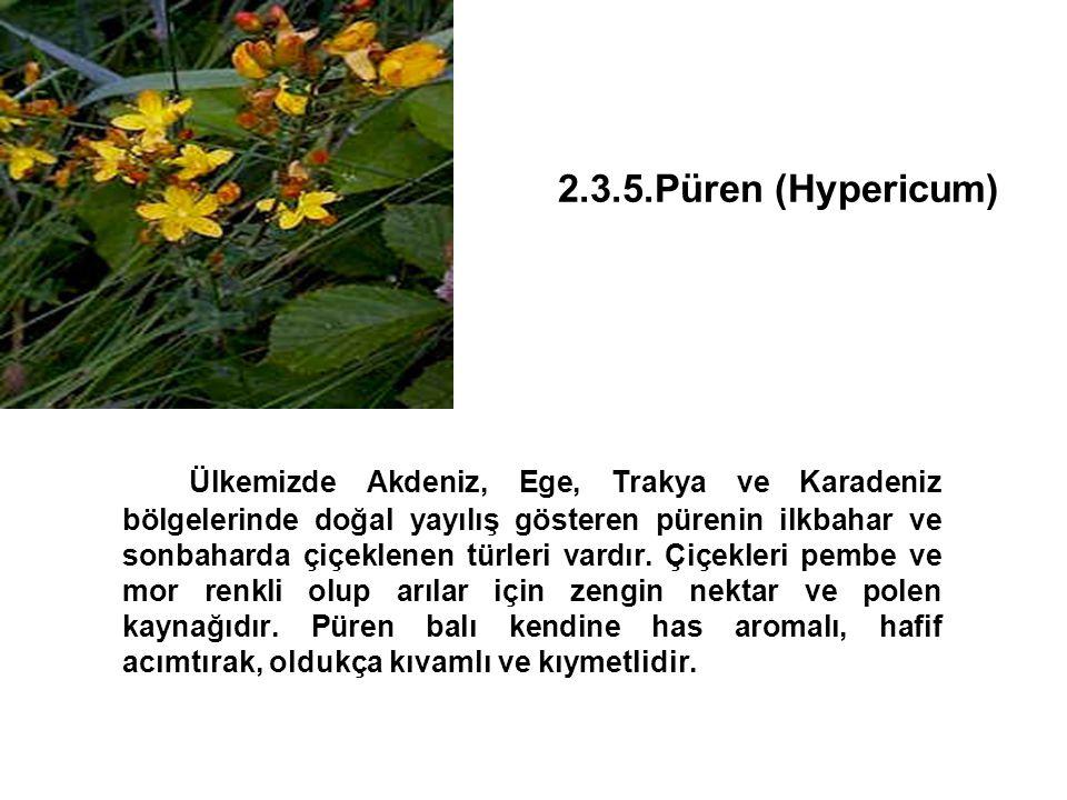 2.3.5.Püren (Hypericum) Ülkemizde Akdeniz, Ege, Trakya ve Karadeniz bölgelerinde doğal yayılış gösteren pürenin ilkbahar ve sonbaharda çiçeklenen türleri vardır.