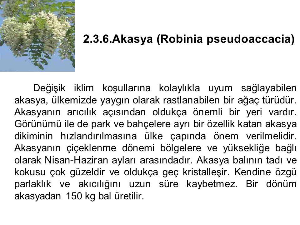 2.3.6.Akasya (Robinia pseudoaccacia) Değişik iklim koşullarına kolaylıkla uyum sağlayabilen akasya, ülkemizde yaygın olarak rastlanabilen bir ağaç türüdür.
