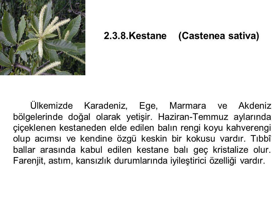 2.3.8.Kestane (Castenea sativa) Ülkemizde Karadeniz, Ege, Marmara ve Akdeniz bölgelerinde doğal olarak yetişir.