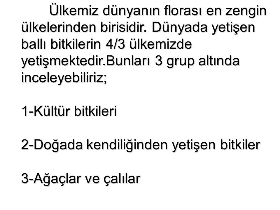 2.2.2.Kekik (Thymus sp.) Ülkemizde yaygın olarak yetişen bir itkidir.