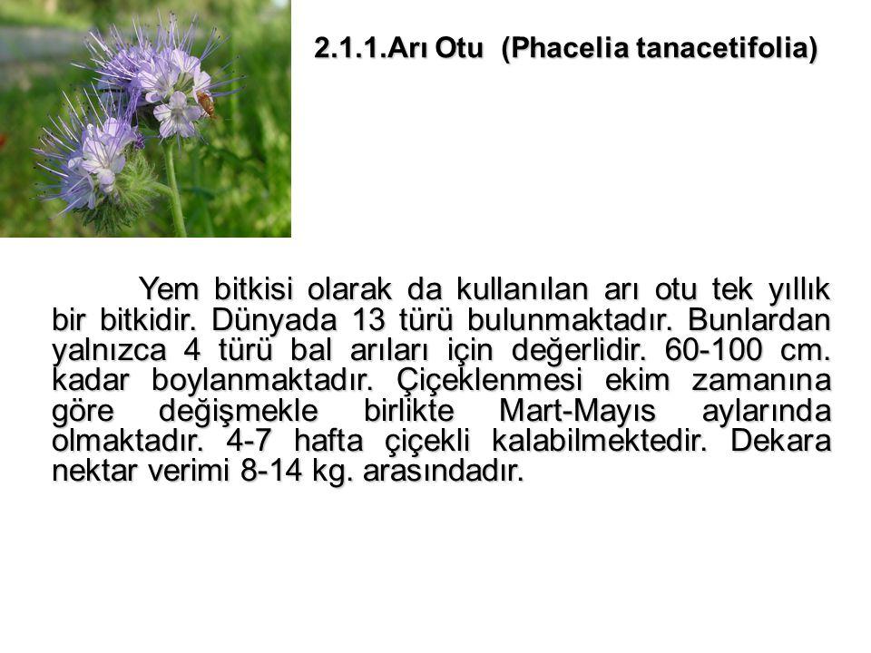 2.1.1.Arı Otu (Phacelia tanacetifolia) Yem bitkisi olarak da kullanılan arı otu tek yıllık bir bitkidir.